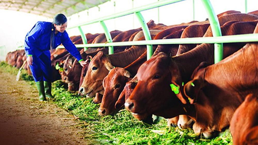 ngành chăn nuôi